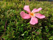 Une fleur tombée photo libre de droits