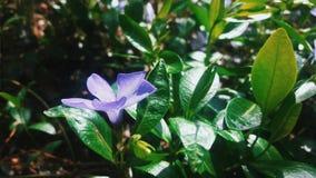 Une fleur très étonnante qui vous enchante avec sa beauté photo libre de droits