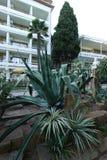 Une fleur verte avec le vert juteux au loin long laisse l'élevage sur un lit de fleur à côté d'un bel hôtel Image stock