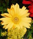 Une fleur vibrante jaune Photographie stock libre de droits