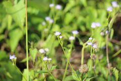 Une fois fleur dans le jardin image libre de droits