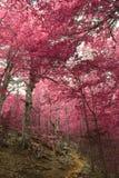 Une forêt automnale rêveuse Image libre de droits