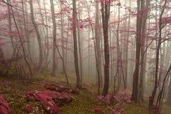Une forêt automnale rêveuse en mont Olympe Image stock