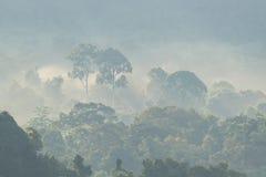 Une forêt brumeuse pendant le début de la matinée Photographie stock