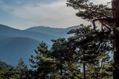 Une forêt dans les montagnes Images libres de droits