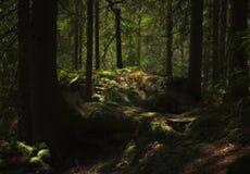 Une forêt de conte de fées, n'est-ce pas ? photographie stock libre de droits