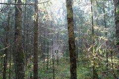 Une forêt de jungle dans la région de Moscou Images libres de droits