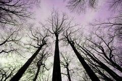 Une forêt de l'hiver Image libre de droits