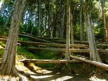 Une forêt de mort dans Berkeley photo stock