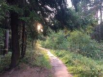 Une forêt mélangée au jour ensoleillé d'été, beau paysage images libres de droits