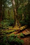 Une forêt mystérieuse Photo stock