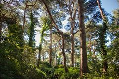 Une forêt mystique aiment un conte de fées image stock