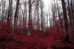 Une forêt rouge surréaliste en Serbie Photos libres de droits