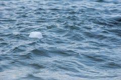 Une forme vide blanche a trouvé la gauche flotter sur le bord de mer Sauvez la terre svp ! images libres de droits