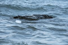 Une forme vide blanche a trouvé la gauche flotter sur le bord de mer Sauvez la terre svp ! images stock