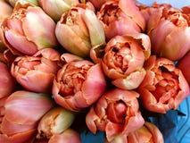 Une foule de belles tulipes au march? photo stock