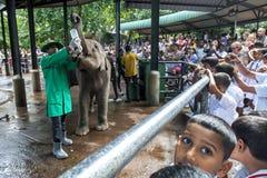 Une foule de montre de personnes comme veau d'éléphant est allaitée au biberon à l'orphelinat d'éléphant de Pinnawela (Pinnewala) Photographie stock