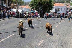 Une foule regarde dessus bullrunning Image libre de droits