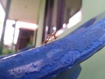 Une fourmi à la mosquée de l'Indonésien Photographie stock