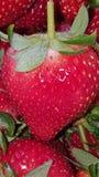Une fraise Photos libres de droits