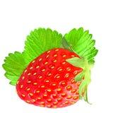 Une fraise avec la feuille d'isolement sur le fond blanc Image stock