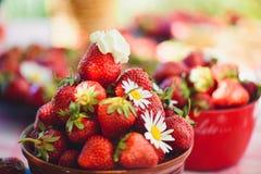 Une fraise fraîche dans une cuvette sur une table dans un jardin d'été est ornée avec des fleurs de camomille avec une étape disc photos stock