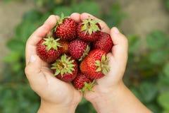 Une fraise fraîche - horizontalement Photos libres de droits