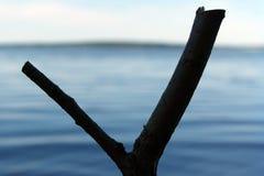 Une fronde isolée pour la pêche images libres de droits