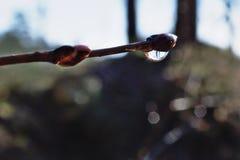 Une goutte de l'eau sur une branche Photos stock