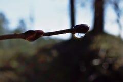 Une goutte de pluie sur le rein Photo libre de droits