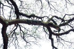 Une grande branche d'arbre Curvey et Gnarly photo libre de droits