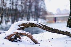 Une grande branche d'arbre se trouve sur la banque de la rivière congelée photographie stock