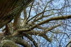 Une grande branche dans un jour d'automne Image stock