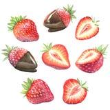 Une grande collection de fraises mûres illustration libre de droits
