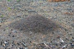 Une grande fourmilière brune grise dans la forêt parmi les aiguilles et les cônes secs photos libres de droits
