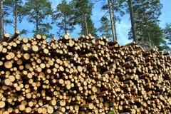 Une grande pile de bois pour l'énergie renouvelable Images stock
