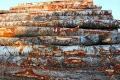 Une grande pile des arbres, en raison de la notation industrielle photos libres de droits
