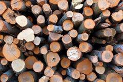 Une grande pile des troncs d'arbre fraîchement sciés, en raison de la notation industrielle images stock