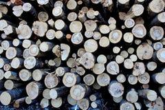 Une grande pile des troncs d'arbre fra?chement sci?s, en raison de la notation industrielle photos stock