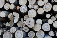 Une grande pile des troncs d'arbre fra?chement sci?s, en raison de la notation industrielle photographie stock