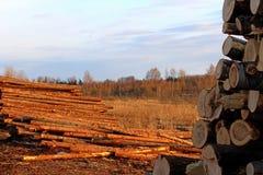 Une grande pile des troncs d'arbre fra?chement sci?s, en raison de la notation industrielle photo stock