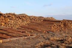Une grande pile des troncs d'arbre fra?chement sci?s, en raison de la notation industrielle photographie stock libre de droits