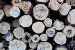 Une grande pile des troncs d'arbre fra?chement sci?s, en raison de la notation industrielle images stock