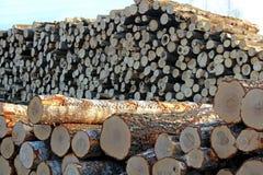 Une grande pile des troncs d'arbre fra?chement sci?s, en raison de la notation industrielle photo libre de droits
