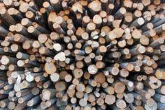 Une grande pile des troncs d'arbre fra?chement sci?s, en raison de la notation industrielle image libre de droits