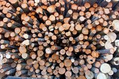 Une grande pile des troncs d'arbre fra?chement sci?s, en raison de la notation industrielle image stock