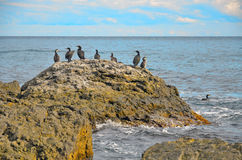 Une grande roche avec une volée des oiseaux sur le fond de la mer en Crimée Photographie stock