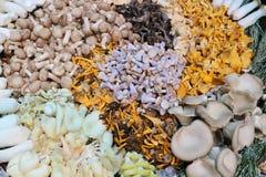 Une grande sélection des champignons sauvages Images stock