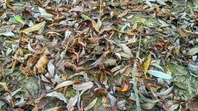 Une grenouille de dissimulation photo libre de droits