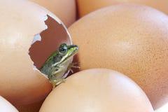 Une grenouille est hachée d'un oeuf de poule photo stock
